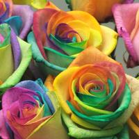Rainbow2_3