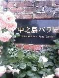 ♪薔薇が咲いた