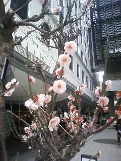 春は来ている…